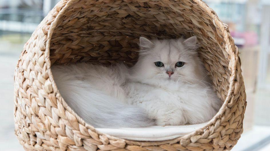 ¡No es mala fama! Las razones científicas de por qué los gatitos son antisociales
