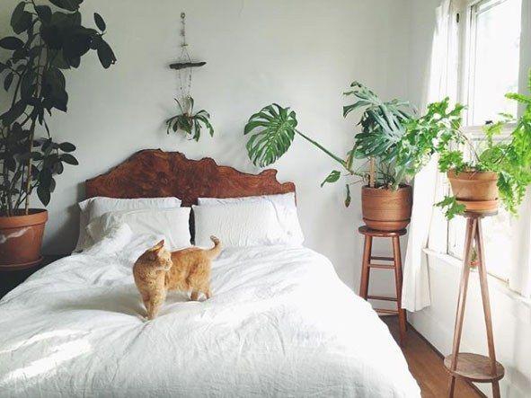 Les Meilleures Plantes Pour La Chambre à Coucher !