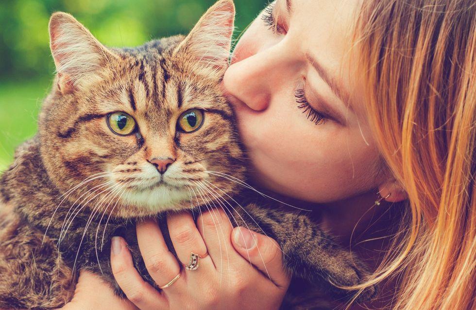 5 trucchi per farti amare dal tuo gatto