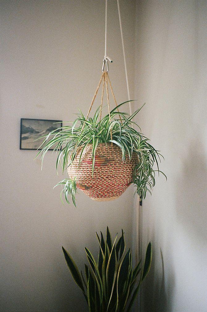 Quelle Plante Avoir Dans La Chambre