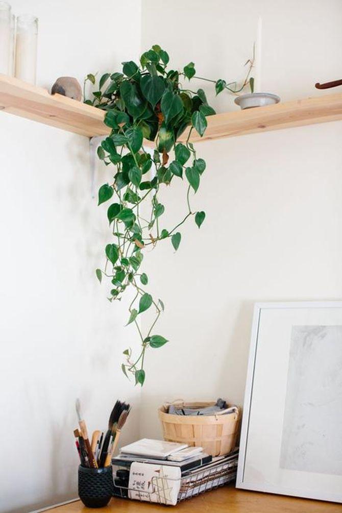 Les Plantes Vertes à Avoir Dans Une Chambre à Coucher