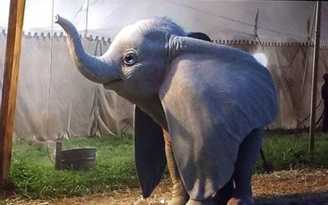 Découvrez les images du live action Dumbo