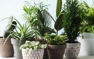 Grüne Oase: Diese 7 Pflanzen wachsen am besten im Bad!