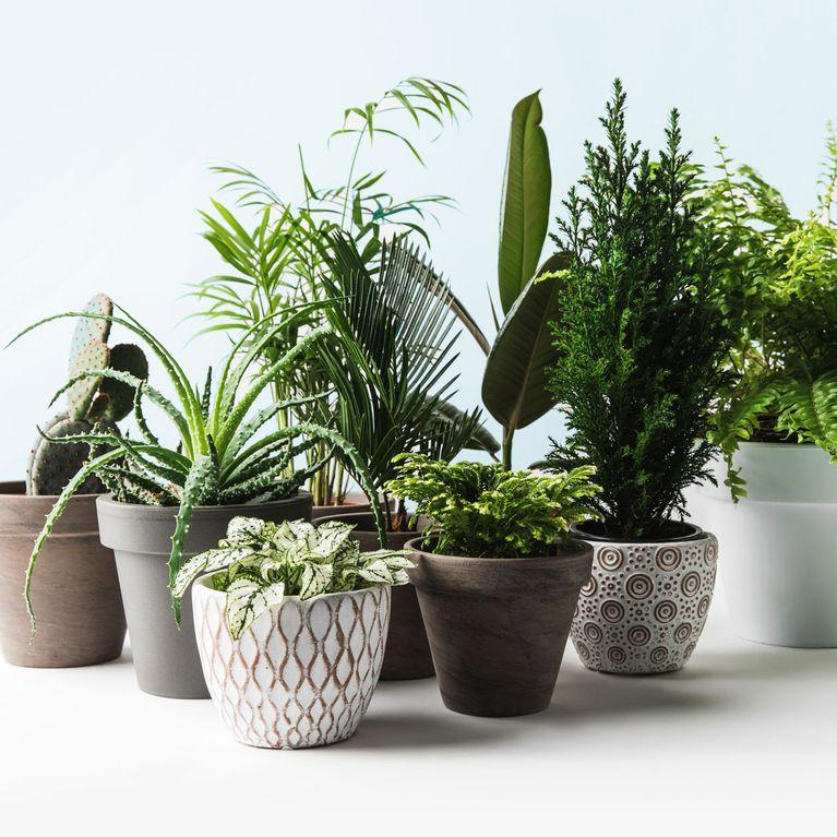 Pflanzen Fürs Bad Diese 7 Gewächse Eignen Sich Perfekt