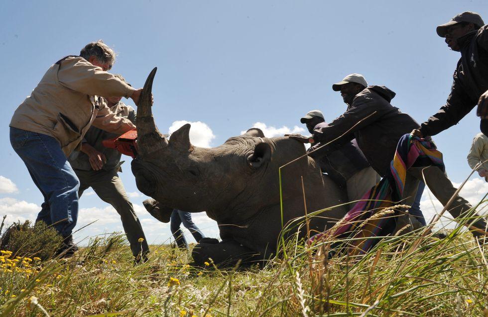 Au Kenya, les braconniers seront bientôt passibles de la peine de mort