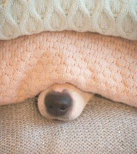 Test: il cane ideale per te in base alla tua personalità e al tuo stile di vita