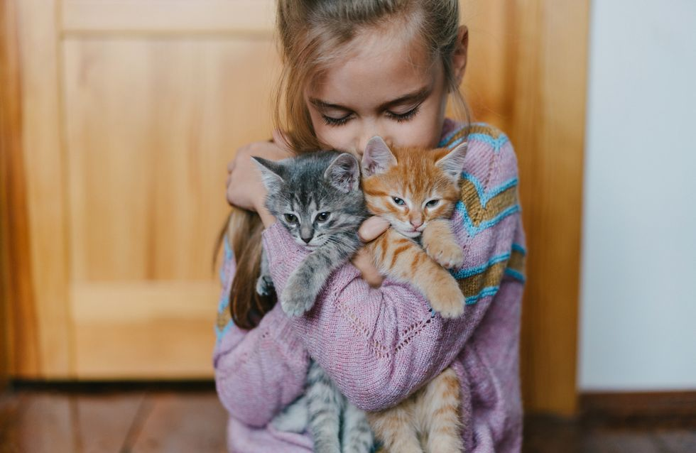 Dans cette école, les élèves travaillent avec des chats pour leur bien-être