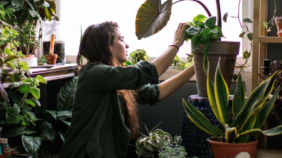 Diese 6 Zimmerpflanzen sind gut für die Gesundheit und machen fitter