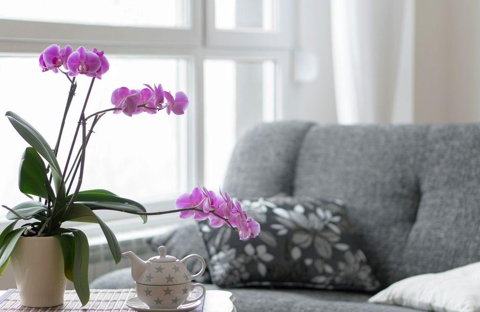 Cómo cuidar una orquídea - Todo sobre las orquideas