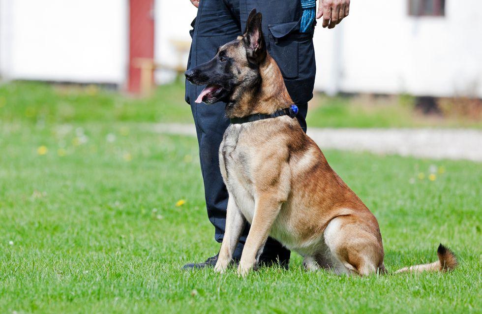 Ce chien tente de réanimer son maître, la vidéo émeut les internautes