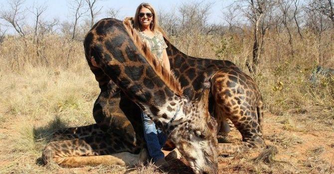 Menacée de mort après avoir chassé une girafe noire, cette chasseuse tente de se justifier
