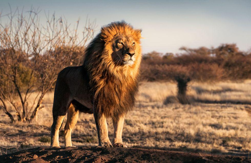 Test: ¿qué animal eres según tu personalidad?