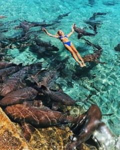 Elle prend la pose pour Instagram, et se fait attaquer par un requin