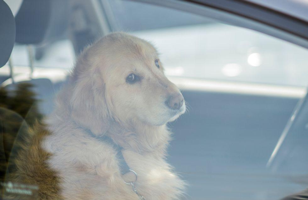 Elle s'enferme dans une voiture pour montrer les effets désastreux que cela peut avoir sur les chiens l'été