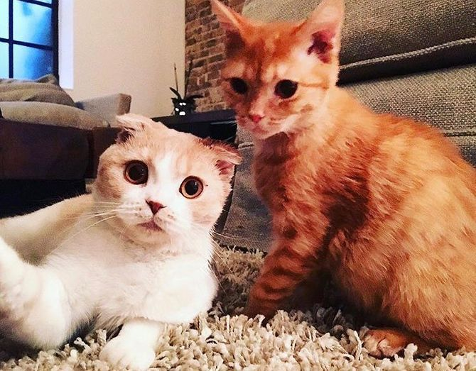 On fond ! Ed Sheeran a ouvert un compte Instagram à ses chats (Photos)