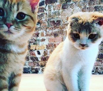 On fond ! Ed Sheeran a ouvert un compte Instagram à ses chats (Photos)