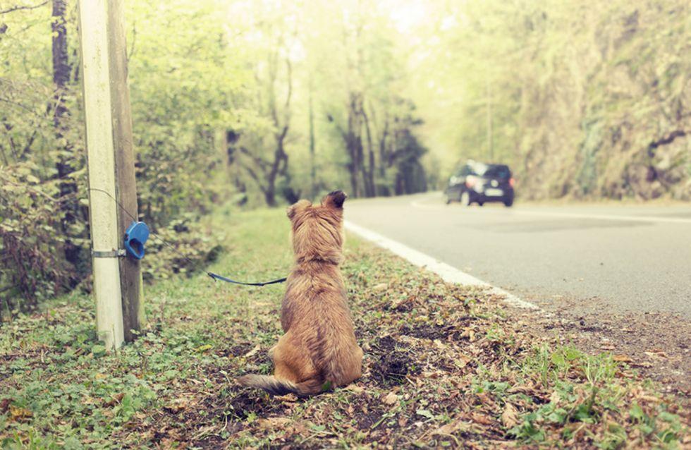 """Après un abandon, """"certains animaux se laissent parfois mourir de désespoir"""""""