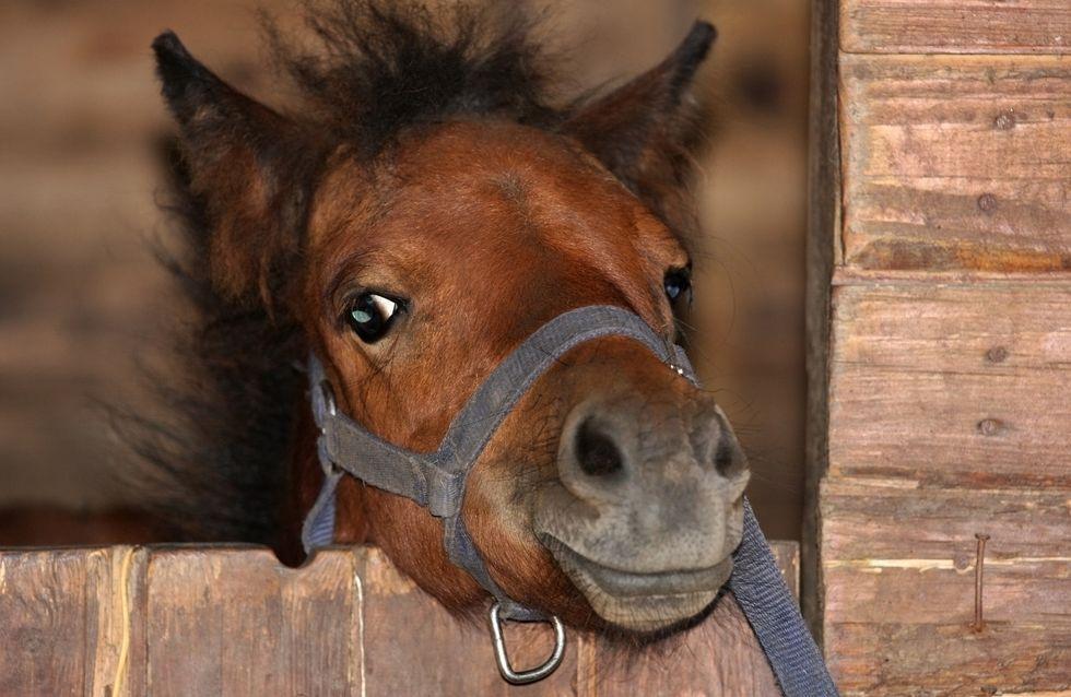 Ignoble ! Un carrousel de poneys vivants fait polémique et on comprend pourquoi (vidéo)