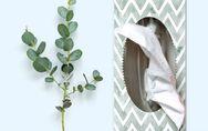 6 Hausmittel gegen eine verstopfte Nase: Endlich wieder frei atmen