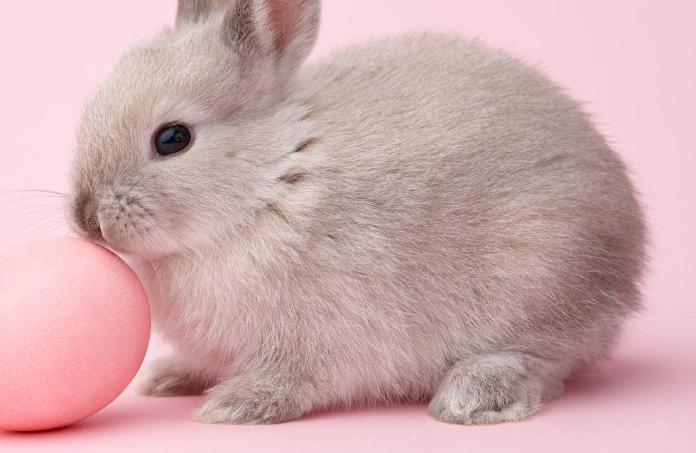 Bravo ! La Californie interdit la vente de cosmétiques testés sur les animaux