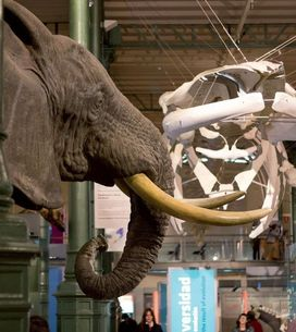 Planes con niños: visita al Museo de Ciencias Naturales de Madrid