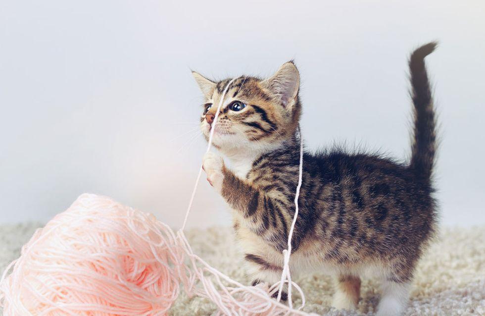 Diese 6 Spielzeuge wird deine Katze garantiert NICHT ignorieren!
