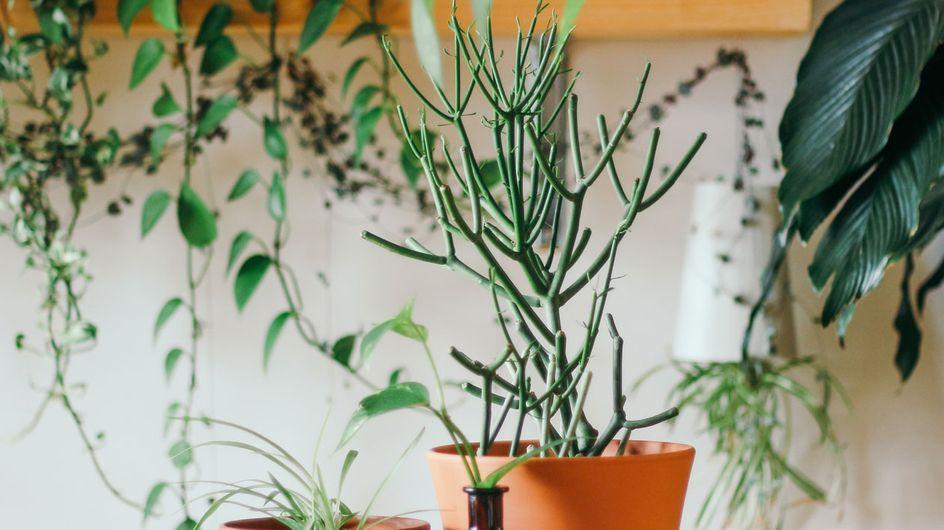 Pflanzen-Styling: Mit diesen 6 Tricks wird dein Zuhause Instagram-tauglich