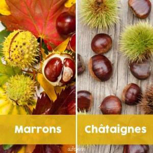Différence entre les marrons et les châtaignes