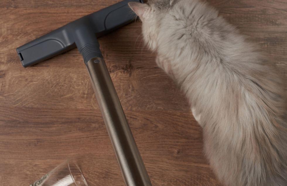 I migliori aspirapolvere e accessori per i peli degli animali