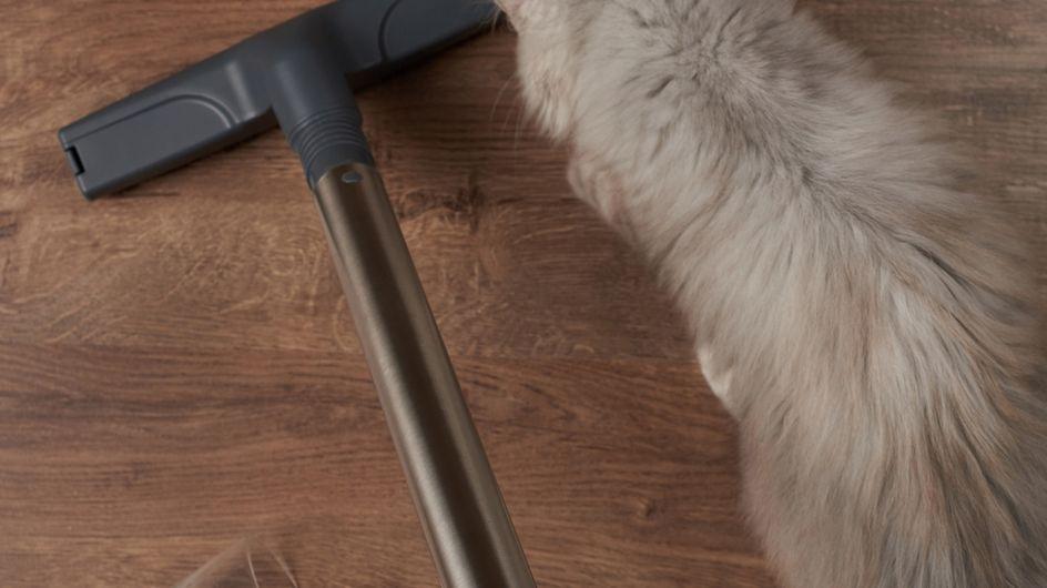 Las mejores aspiradoras y accesorios para el pelo de tus mascotas