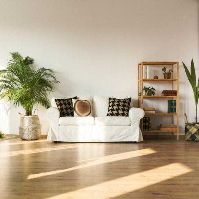 Piante e appartamento