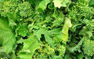 Le broccolini, super-aliment tendance et de saison
