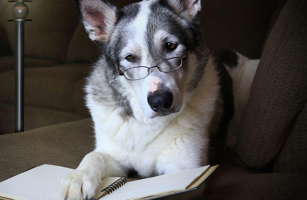 Test sul futuro: scegli un animale e scopri il tuo destino