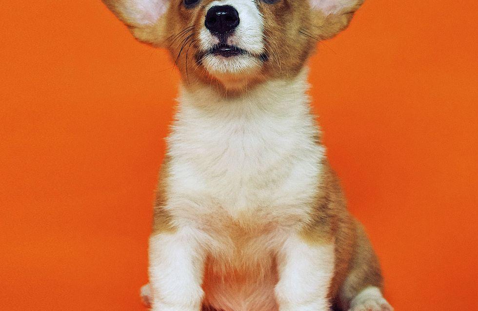 Geschenke für Hundebesitzer, die wirklich sinnvoll sind