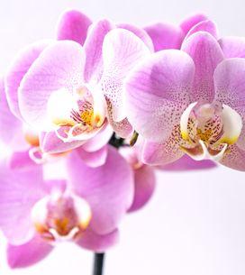 Pflanzen-Hacks: So bringst du deine Orchidee wieder zum Blühen
