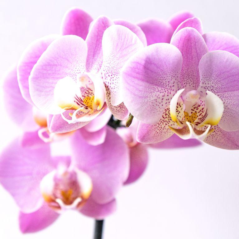 Gemeinsame Pflanzen-Hacks: So bringst du deine Orchidee wieder zum Blühen! &EU_21