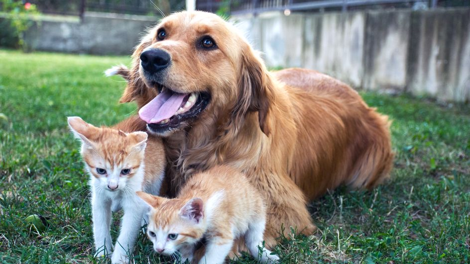 Le Noël des animaux de la SPA : 400 chiens et chats sont à adopter