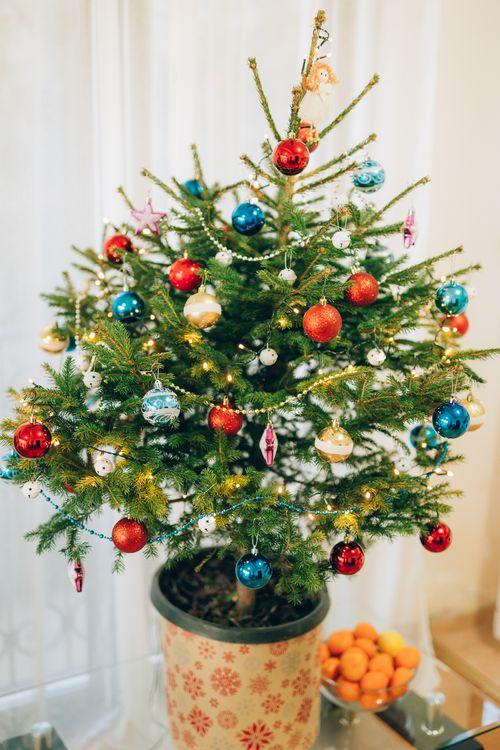 Nadelfrei Und Nachhaltig 5 Geniale Weihnachtsbaum Alternativen