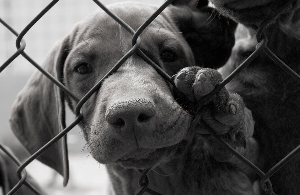 Cette campagne contre l'abandon des animaux nous met la larme à l'œil (vidéo)