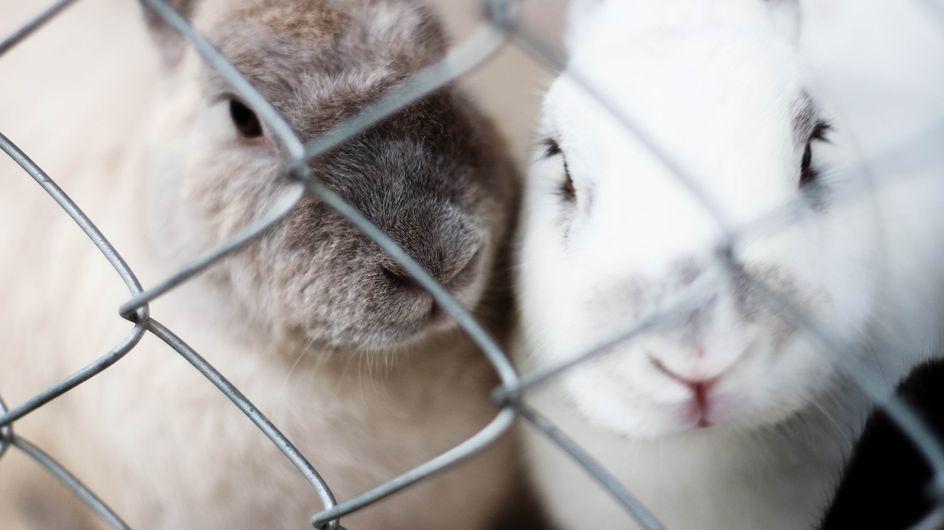 La SPA appelle à l'aide pour sauver 7000 animaux après le meurtre de leur éleveuse