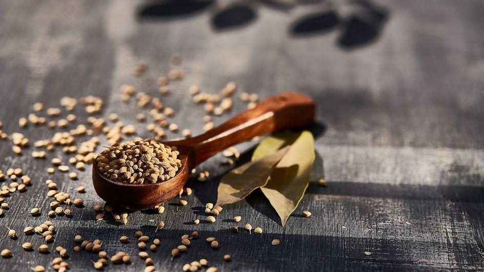 Les types de graines à faire germer
