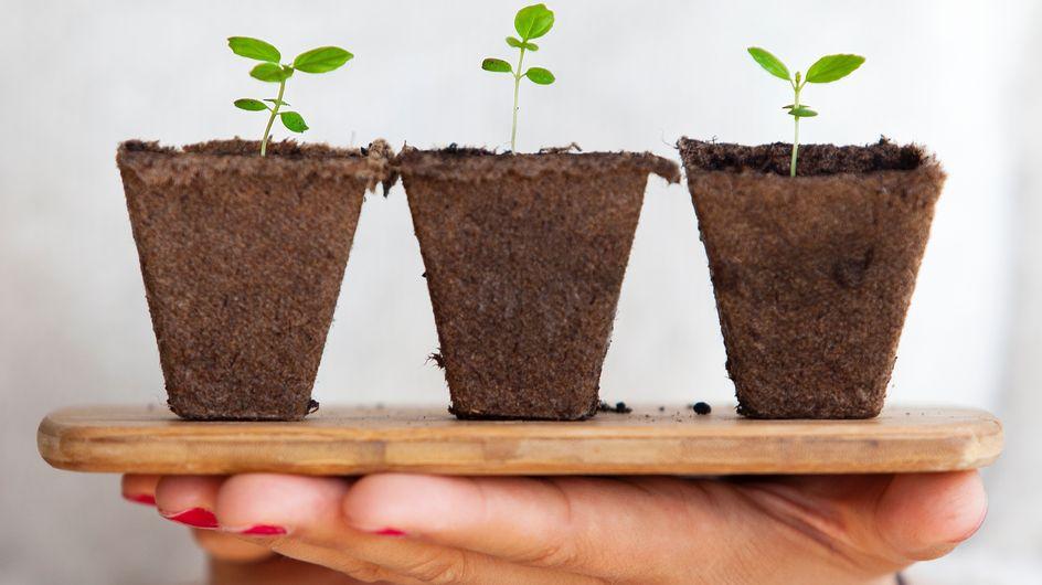 5 herramientas ingeniosas para cuidar tus plantas con éxito