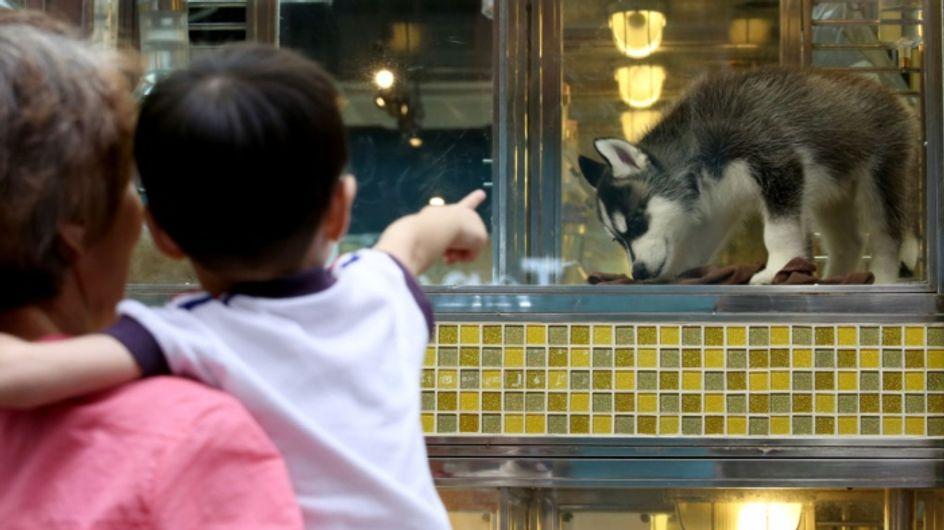 Cette vidéo révèle d'où proviennent les animaux vendus en animalerie... Et c'est choquant !