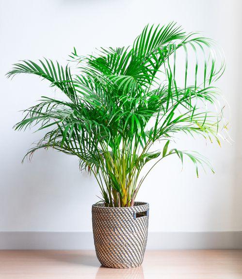 6 Zimmerpflanzen Die Wenig Licht Brauchen