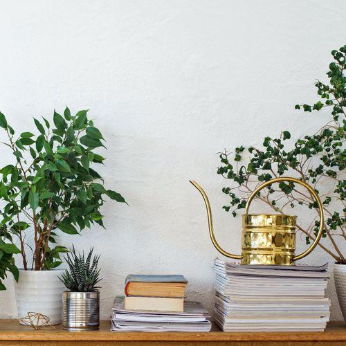 6 Zimmerpflanzen, die wenig Licht brauchen