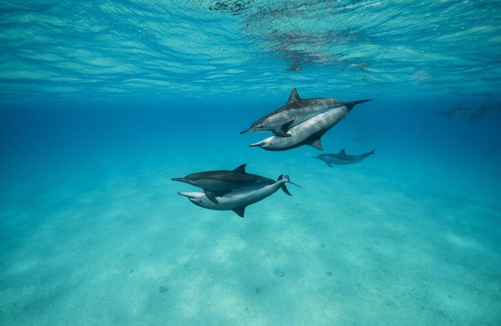Une centaine de dauphins se sont échoués sur la côte atlantique