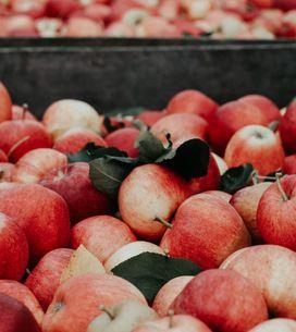 Propiedades de la manzana: la fruta por excelencia para la salud