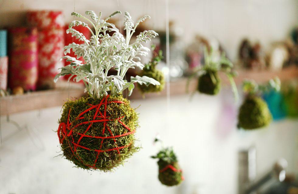 DIY : le kokedama, la plante déco sans pot