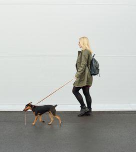 Promener des chiens pour combattre la dépression, la bonne idée de cette univers