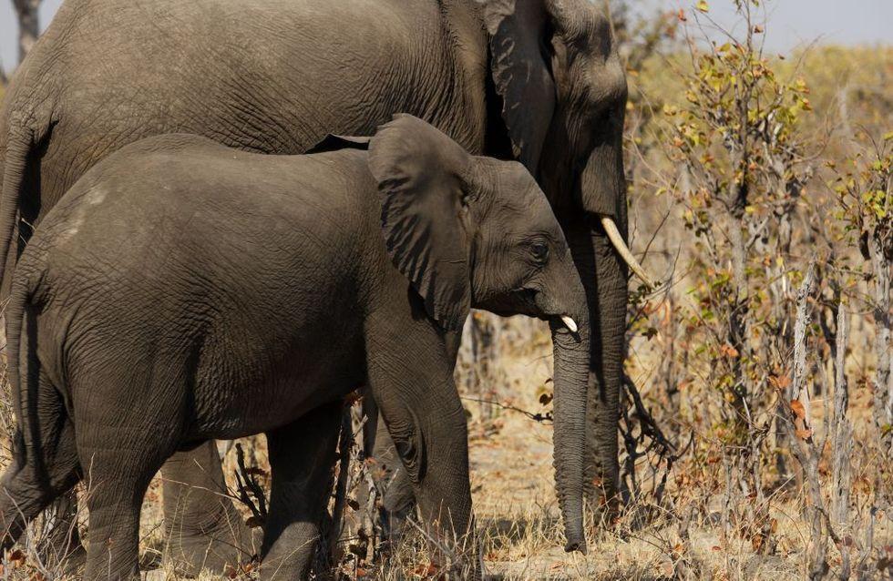 Le Botswana veut légaliser la chasse aux animaux sauvages